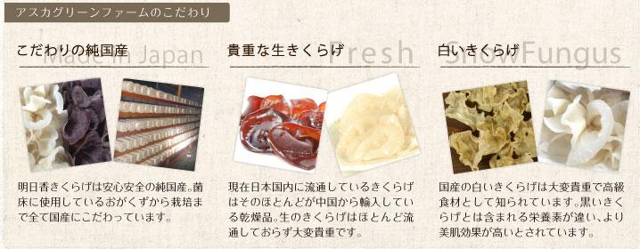 アスカグリーンファームのこだわりポイント | こだわりの純国産 made in japan / 明日香きくらげは安心安全の純国産。菌床に使用しているおがくずから栽培まで全て国産にこだわっています。 | 貴重な生きくらげ Fresh / 現在日本国内に流通しているきくらげはそのほとんどが中国から輸入している乾燥品。生のきくらげはほとんど流通しておらず大変貴重です。 | 白いきくらげ snow fungus / 国産の白いきくらげは大変貴重で高級食材として知られています。黒いきくらげとは含まれる栄養素が違い、より美肌効果が高いとされています。